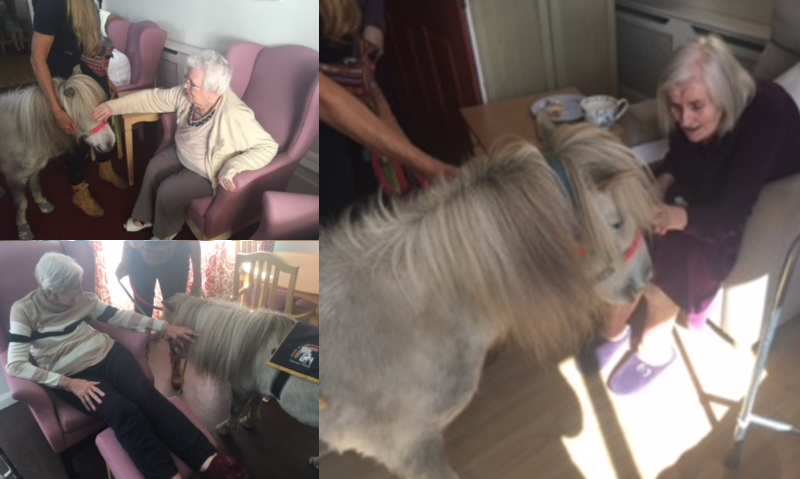 Lovely Leo the Therapy Pony makes a visit